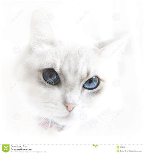 imagenes ojos blancos gato blanco con los ojos azules imagen de archivo imagen