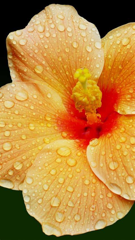 Blumensträuße Bilder by Die 90 Besten Blumen Hintergrundbilder F 252 R Iphone