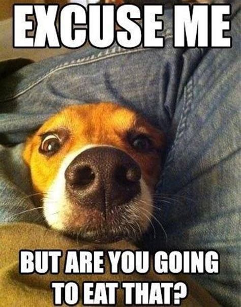 Dog Problems Meme - 10 memes that get life with dogs oh so right