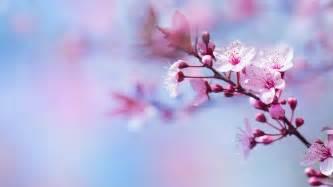 g 233 rer ses 233 motions avec les fleurs de bach beautistas