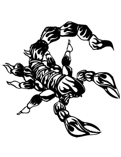 free scorpion pictures coloring pages