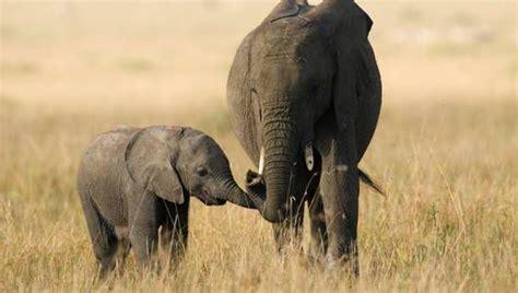 elephants      pass  quiz mnn