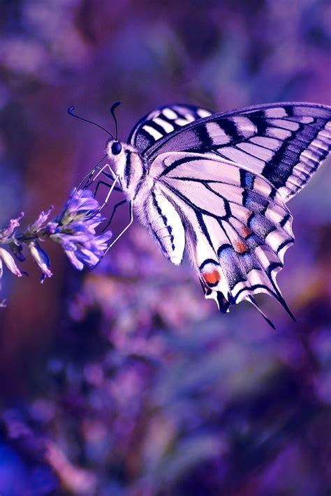 wallpaper iphone 6 butterfly 640x960 beautiful butterfly iphone 4 wallpaper
