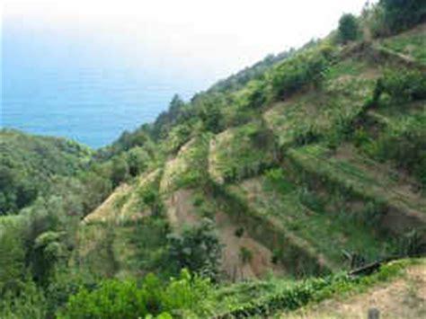 terrazzamenti in collina unita