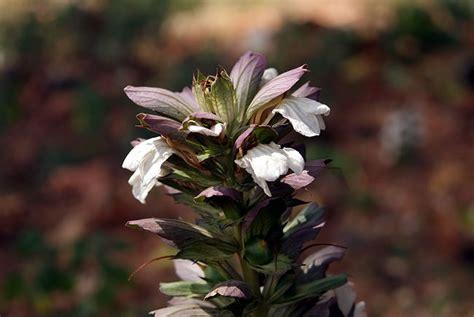 Blumen Und Pflanzen by Blumen Und Pflanzen 3 Istrien Kroatien Photos Und