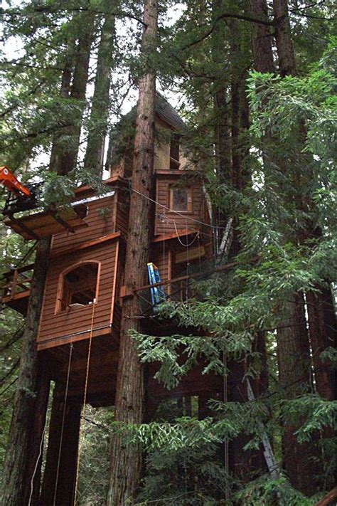 live in tree house pictures tree house i would live in this tree houses