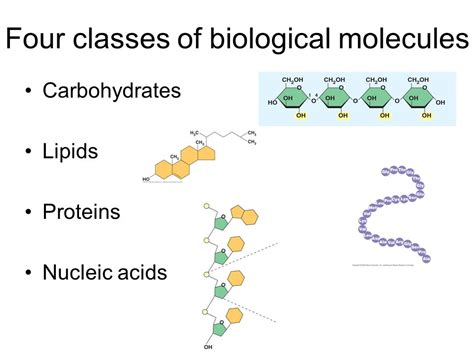 Mba 2 Biological Molecules by The Structure And Function Of Large Biological Molecules