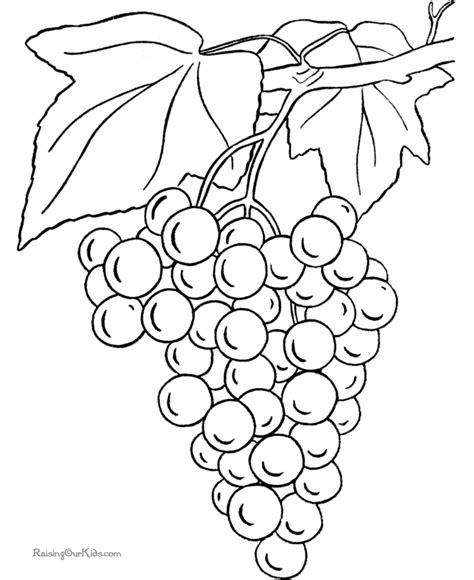 grape leaves coloring pages grapes coloring page to print and color fruit