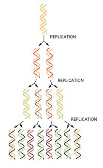 7 proteins involved in dna replication the steps and proteins involved in dna replication