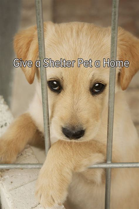 puppy shelters give a shelter pet a home shelters pets and home