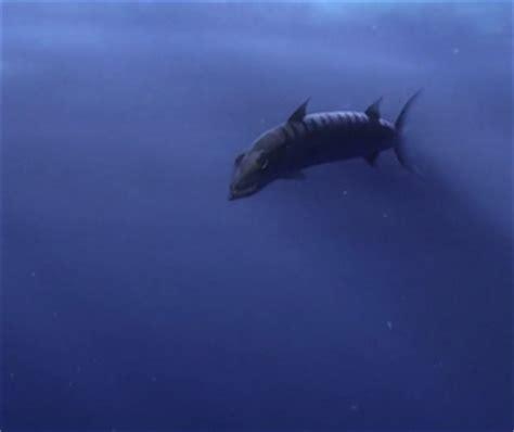barracuda finding nemo | www.pixshark.com images
