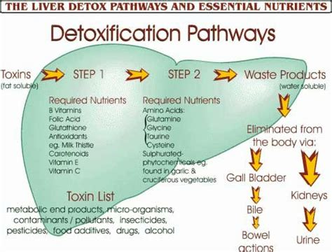 Took Liver Detox Pill And Back Started To Itch the best foods and nutrients to support liver detox the