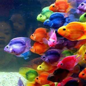 colorful fish beautiful colorful fish the sea