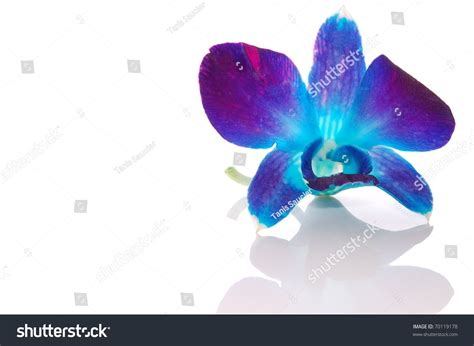 Box A Single Sky Blue Preserved Flower Represent Mystery blue orchid flower bouquet of blue orchid isolated on white background stock photo blue