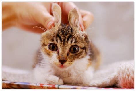 cabbit images 34 best images about cabbits cat rabbit on