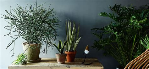 plants that don t require sunlight 12 aesthetic plants that don t require sunlight and can