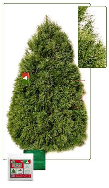 fresh cut trees delivered 8 foot premium fresh cut live tree delivery to