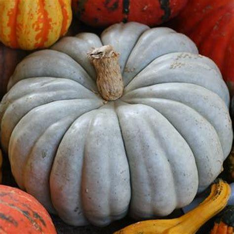 Product Find Pumpkin Sugar 2 by Blue Pumpkin Seeds Seeds
