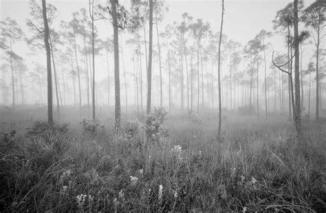 z misty pines 31 169 2008 clyde butcher black white