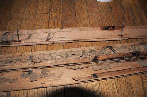Termite Damage To Hardwood Floors by Termite Damage Wood Floors