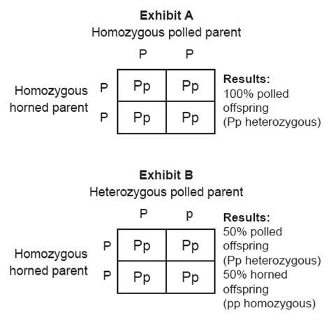 exle of heterozygous homozygous dominant and homozygous recessive pictures to