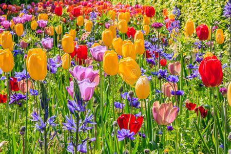 fiori di tutti i colori fiori di tutti i colori dappertutto fotografia stock