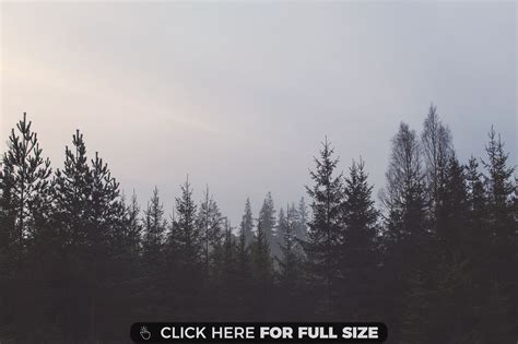 grey sky sky nature background wallpapers on desktop pines wallpapers photos and desktop backgrounds up to 8k