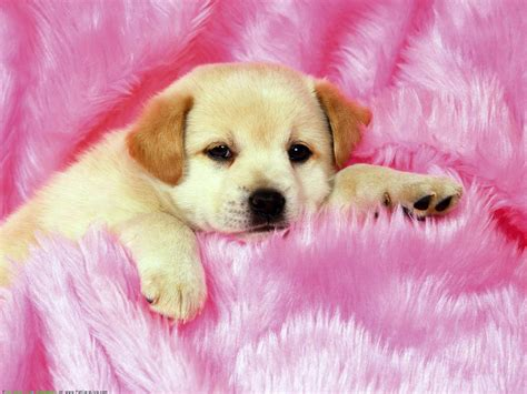 cute dog wallpaper cute dogs and puppies wallpapers wallpaper cave