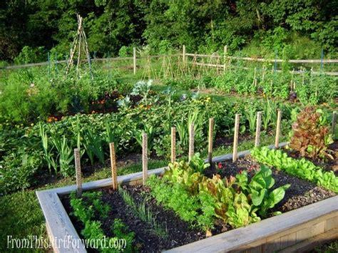 Vegetable And Herb Garden Vegetable And Herb Gardens Must Garden Thyme