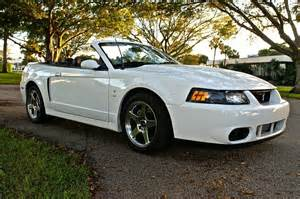 2004 Ford Mustang Cobra 2004 Ford Mustang Svt Cobra Pictures Cargurus