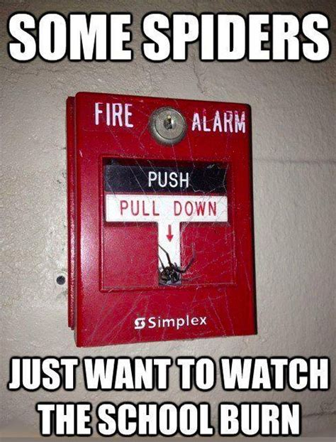Spider Fire Alarm Meme - 1000 images about i hate spiders on pinterest