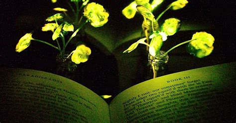 glow in the dark plants glow in the dark plants put green energy in a whole new light
