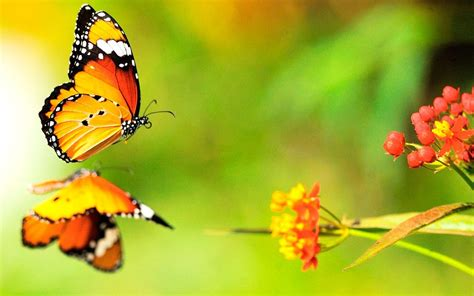 imagenes de mariposas oscuras galer 237 a de im 225 genes mariposas de colores