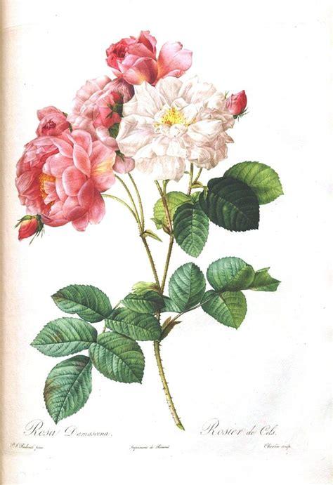 free printable flowers pinterest best 25 floral printables ideas on pinterest printable