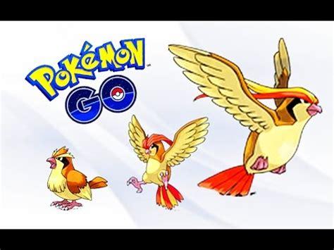 pokemon go pidgey to pidgeotto to pidgeot evolution