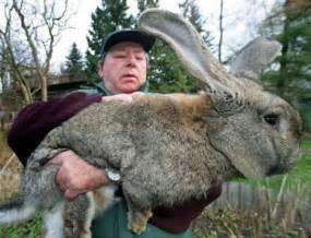 4 Foot Rabbit Hutch The Easter Rabbit Is Here Big Other