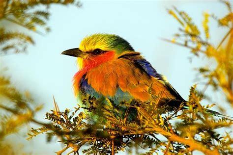 beautifu birds beautiful nature photo 23334468 fanpop