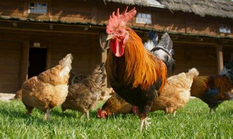 5 Animales Que Deberias Ver by 5 Cosas Que Te Har 225 N Ver A Los Animales De Granja 161 De