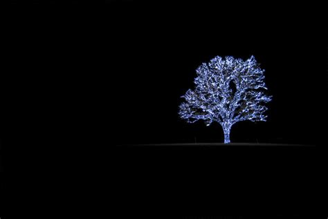 how to photograph a tree with lights light photography tips picturecorrect