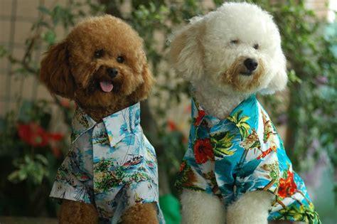 Pet Clothes Animal china pet clothes china pet clothes pet
