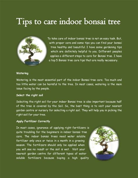 Care Tips 1 by Tips To Care Indoor Bonsai Tree