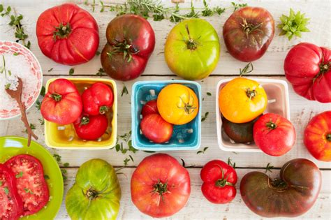 Tomaten Selbst Z Chten 5195 tomaten z 252 chten 187 der anzucht bis zur ernte
