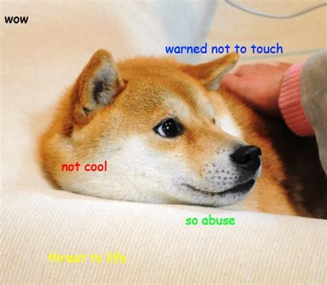 Doge Sex Meme - 13 best images about doge on pinterest the criterion