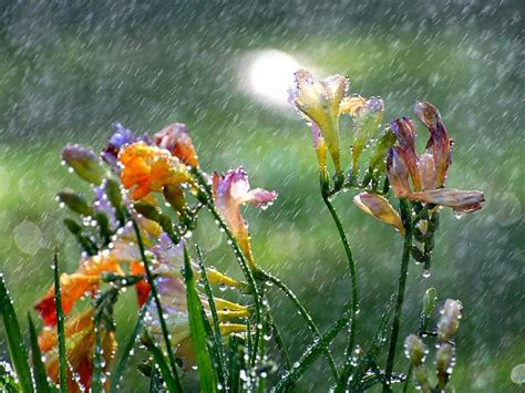 Sweet April Showers Do May Flowers by April Showers Bring May Flowers Anacreontic Verse Poem