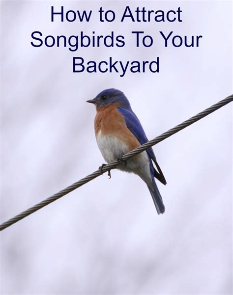 how to attract songbirds to your yard and garden the