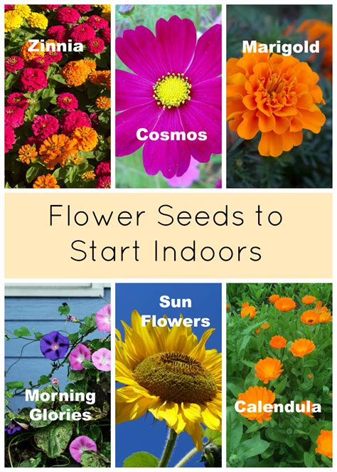 how to start a flower garden in your backyard planting a garden starting seeds indoors eieihome