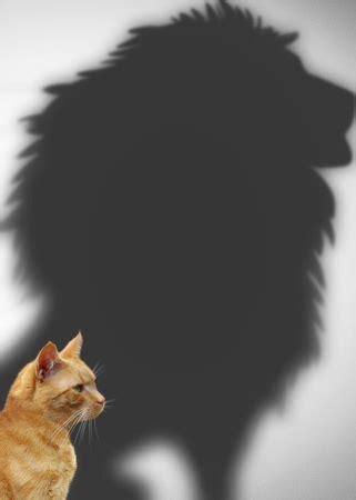 我在找一张图片,是一只猫仰天长啸,影子是一只狮子仰天长啸,希望各位路过的大神能够帮个忙哇~_百度知道