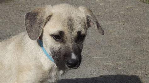heinz 57 puppy babies dogs genuine heinz 57 llandysul ceredigion pets4homes