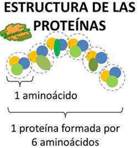 proteinas y su estructura como se forman las prote 237 nas