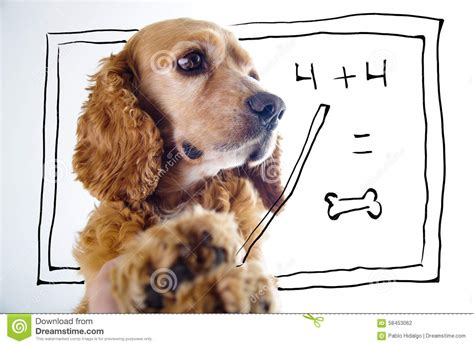 math puppy cocker spaniel puppy in front of a stock photo image 58453062